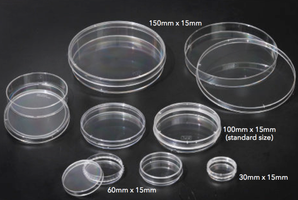 Agar plates petri dishes for Agar agar cuisine
